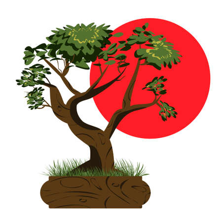 Bonsai tree. Japanese bonsai tree in the pot and with grass around. Plant icons isolated on white background. Asian plant with the sun in the background. Detailed image. Vector