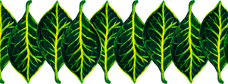 Green croton plant leaves seamless pattern.Hand painted floral web format banner.