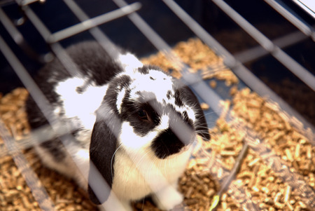 rabbit in cage: The white and black rabbit in the cage Stock Photo