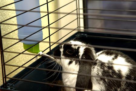 rabbit cage: L'acqua bevanda coniglio in gabbia