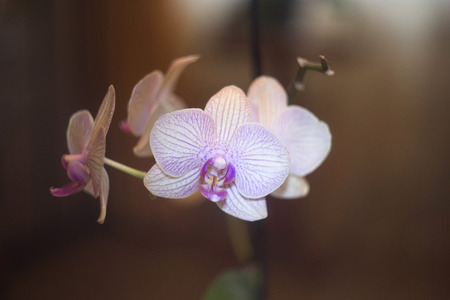 flourished: The beautiful blooming orchids. Nature into house