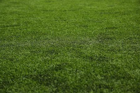 terrain de foot: Motif de l'herbe verte artificielle. Grass texture fond