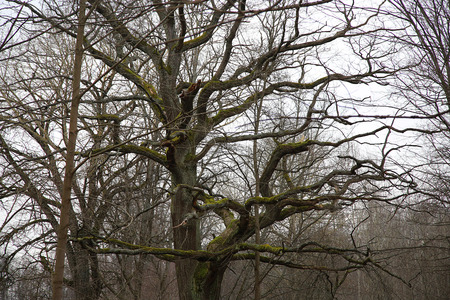 gloom: tree branch without leaves at gloomy weather Stock Photo