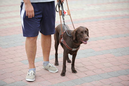 blind person: blind person with guide dog near his leg