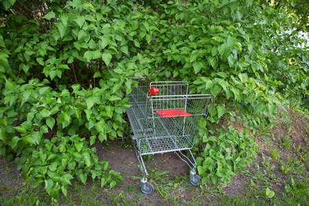 shoping: go shoping cart to the forest nature concept