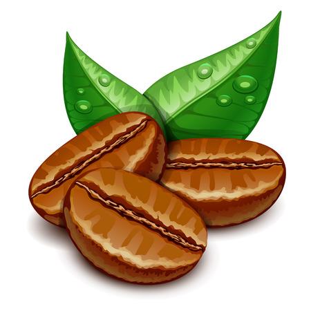 chicchi di caff�: caff� Vettoriali