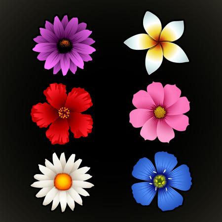flor aislada: Flor aislada