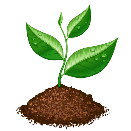 soil: green plant