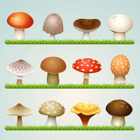 mushroom illustration: mushrooms on grass