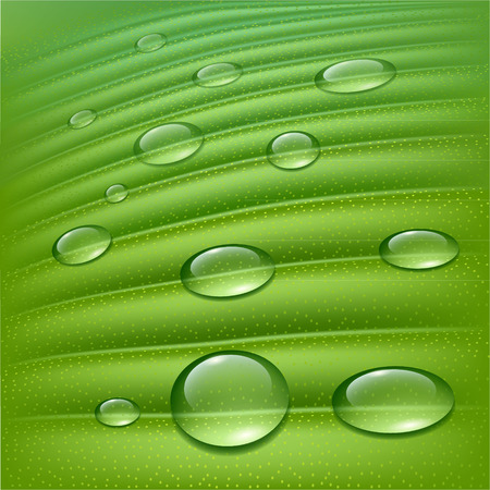 reflection of life: Water drops on fresh green