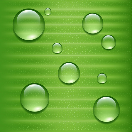 leaf water drop: Water drops on green  leaf Illustration