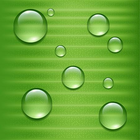 Water druppels op groen blad Stock Illustratie
