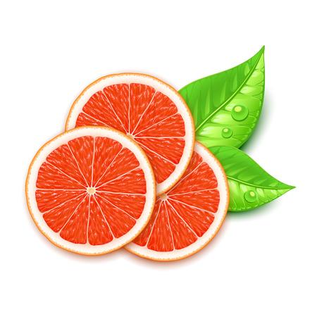grapefruit slice Stock Illustratie