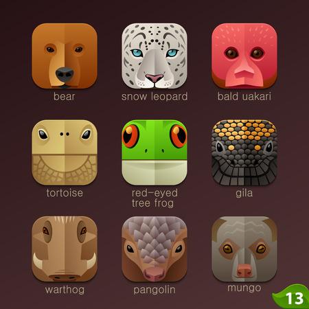 rana caricatura: Enfrenta Animal para aplicaciones iconos-set 13