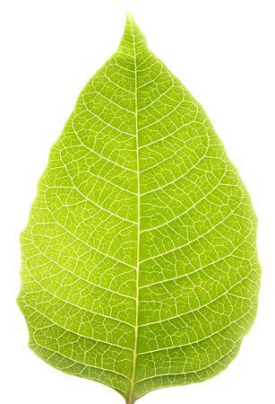 minutiae: Green leaf close-up Stock Photo