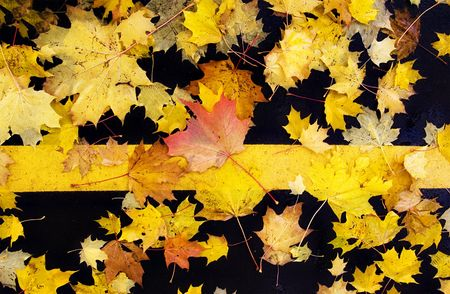 falling tide: maple leaves lie on the pavement Stock Photo