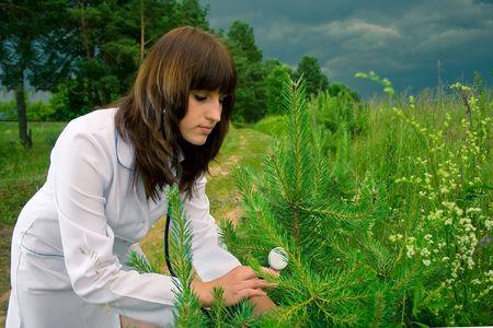 Doctor treats tree photo