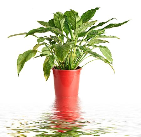 plant in a pot reflection in water
