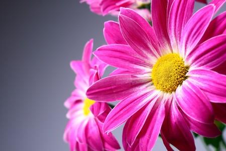 bouquet fleur: Fleurs pourpres sur un fond sombre