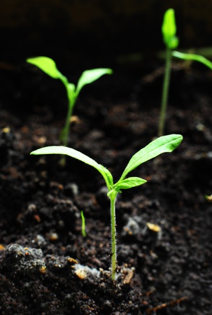 New plant just entered from dirt Stock Photo - 9386384