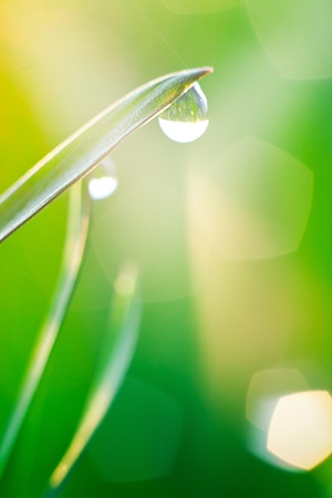 Morning dew on blades of grass during sunrise Stock Photo - 9460470