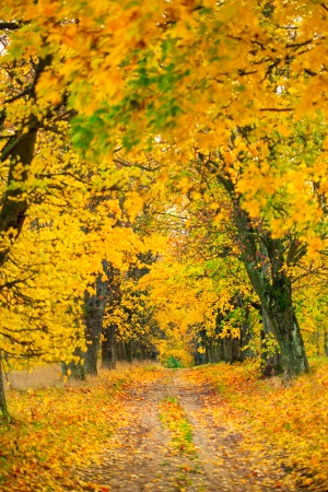 Autumn alley with yellow leaves photo