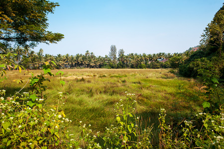 Landscape in India. Field and palm. photo