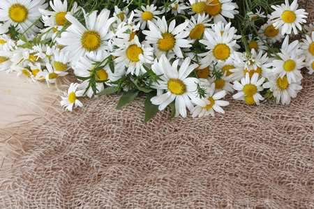 bagging: Daisies on bagging background