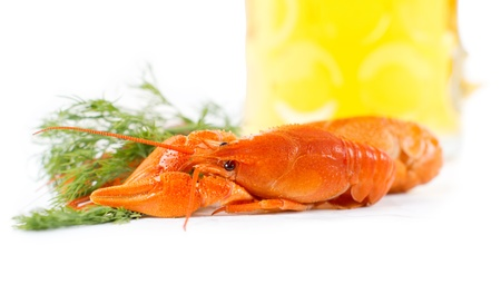 Delicious cooked whole unpeeled king prawn or crawfish with a sprig of fresh dill on a white background photo