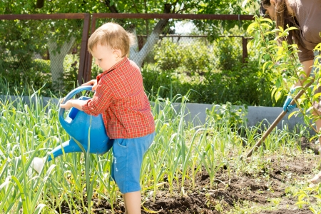 family gardening: Little boy watering the onion plants from a large blue plastic watering can while his mother weeds the beds in the background Stock Photo