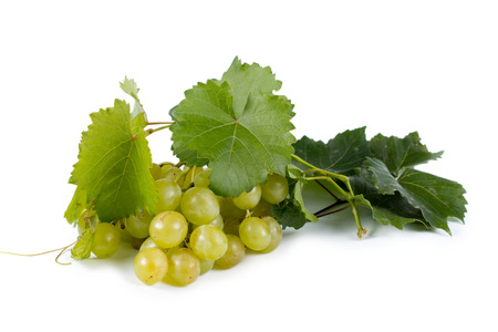 Bunch of ripe juicy fresh green grapes with vine leaves for eating as a healthy snack or for use in wine making on a white background Stock Photo