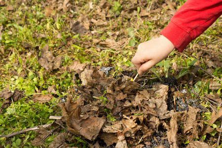 kindling: Young child setting alight to a small fire of twigs, wood chips and dead leaves that he has made on a grassy field using a burning match