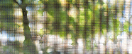 Looking Out Through Screen Door or Window at Trees Outside Stock Photo