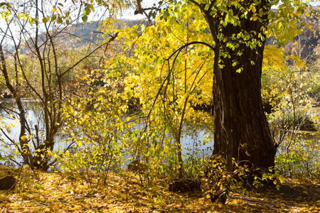 riverside tree: Attractive Tranquil View of the Riverside During Autumn with Green Grasses and Tall Tree.