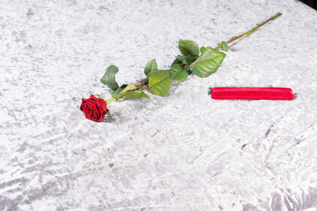 counterpane: Romantic red rose and gift on a white counterpane on a bed, a surprise for a sweetheart on Valentines day or an anniversary
