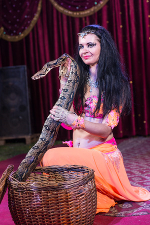 animal sexy: Portrait of Exotic Dark Haired Snake Charmer Removing Large Snake from Basket While Kneeling on Stage with Red Curtain in Background