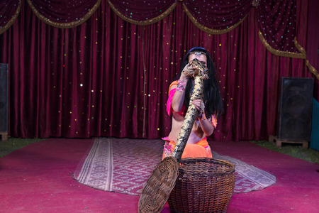 pet  animal: Exotic Dark Haired Snake Charmer Removing Large Snake from Basket While Kneeling on Stage with Red Curtain in Background