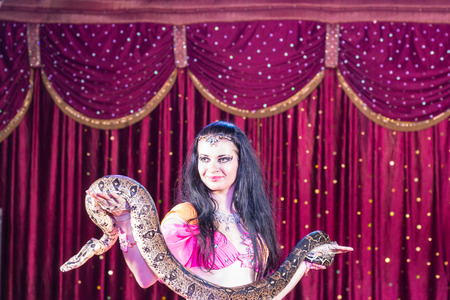 animal head: Waist Up of Exotic Dark Haired Belly Dancer Standing on Stage Holding Large Snake with Red Curtain in Background Stock Photo