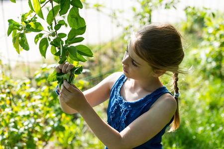 waist up: Waist Up of Inquisitive Young Girl with Braid Wearing Blue Tank Top Inspecting Leaves on Lush Green Tree Branch Outdoors on Sunny Summer Day Stock Photo