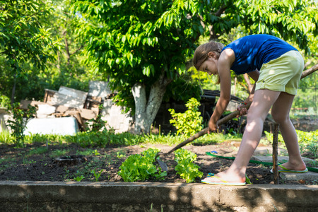 bending down: Young girl weeding the vegetable patch bending down working with a hoe amongst the young plants