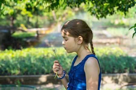 frailty: Cute genuine girl with long pony-tail and blue sleeveless top holding a fragile fuzzy dandelion while blowing on its seeds, outdoors in a green garden Stock Photo