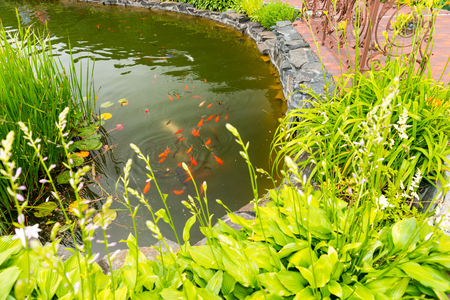 Beautiful human-made pond with different fish fenced with bushes and flowers in a park