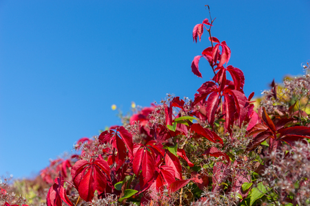 Red leaves with flowers against blue sky in a park