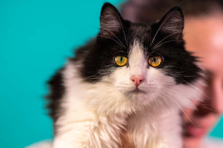 Black and white cat with yellow-green eyes 스톡 콘텐츠