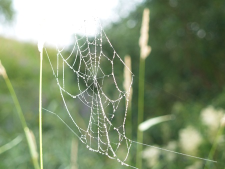 web with droplet grow on green background