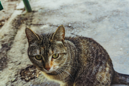 A beautiful gray striped cat lives on the street without a master and wants a caress