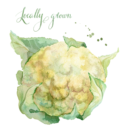 locally: Watercolor Illustration of cauliflower, hand painted. Locally grown watercolor lettering Stock Photo