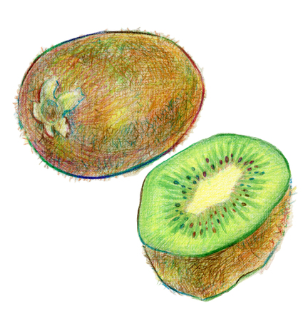wholesome: Hand drawn Illustration of kiwi fruit in color pencils on white background
