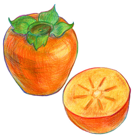 tacky: Illustration of ripe persimmon fruit in color pencils on white background