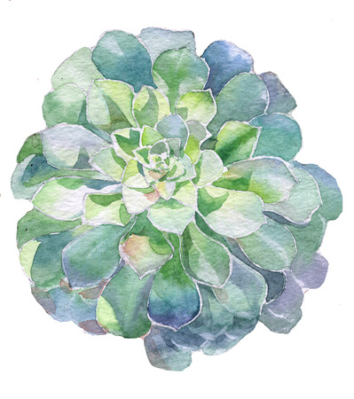 succulent: Watercolor succulent plant handpainted with watercolor paint Stock Photo